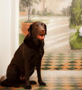 services hotel pet friendly